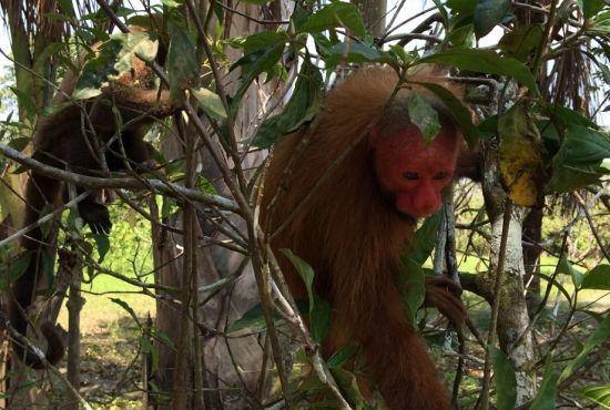 Isla de los Monos con  Fundo Pedrito